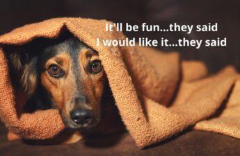 Scared Dog in Blanket